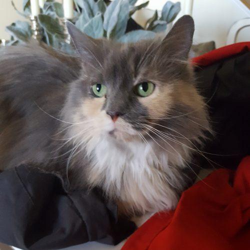 cat1_v2