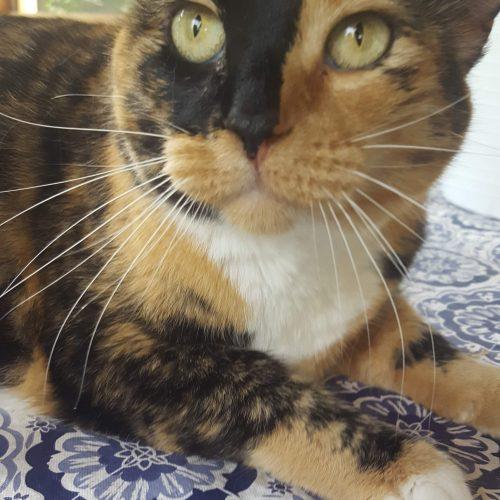 cat2_v2