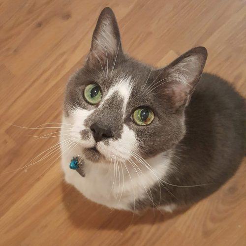 cat4_v2