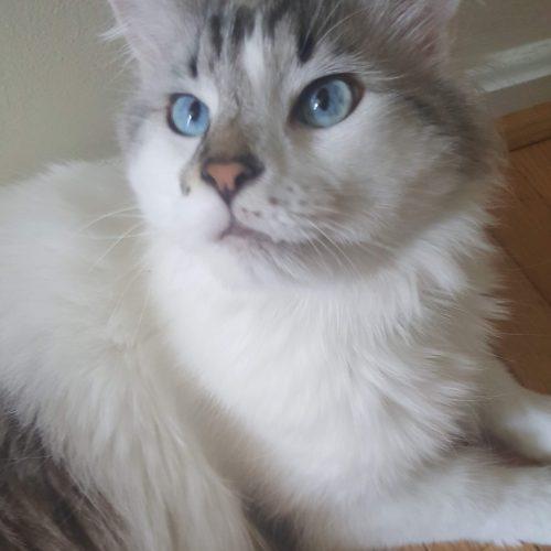 cat6_v2